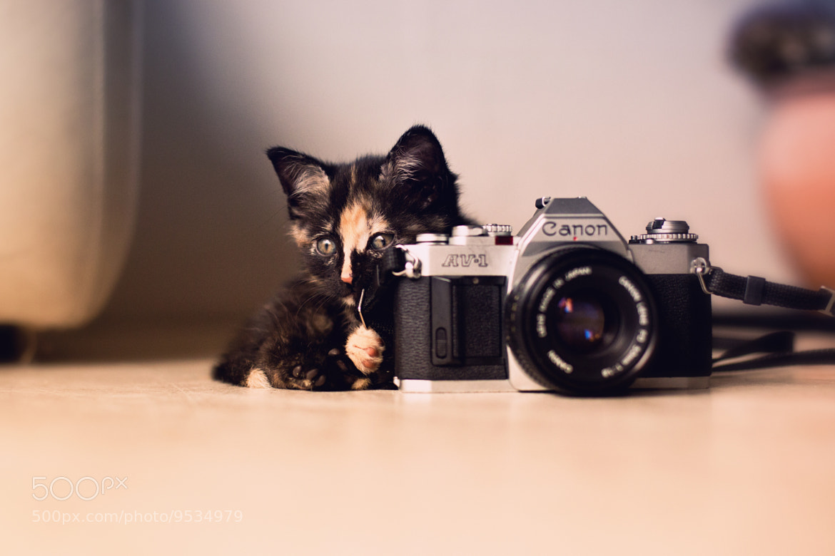 Photograph Canon Cat by LS Photographie on 500px