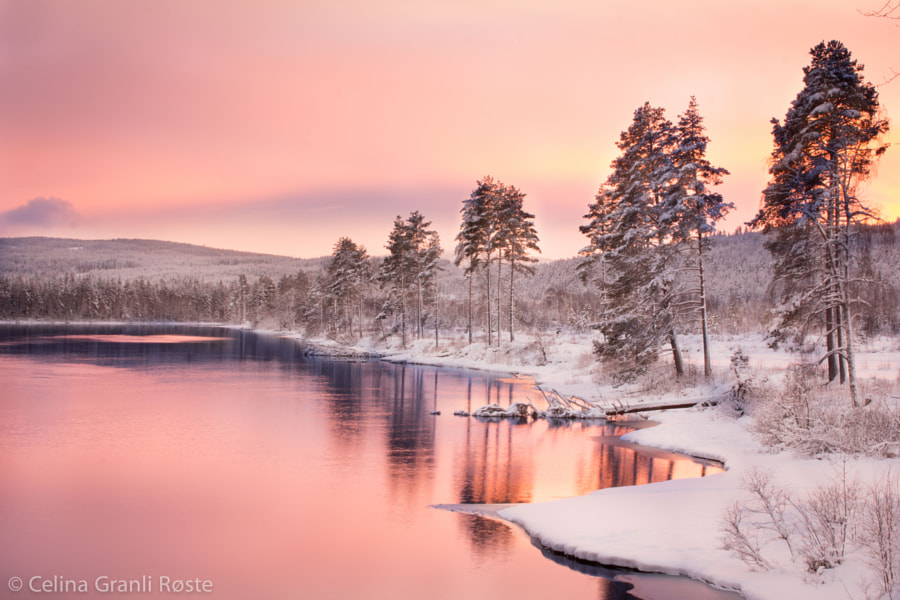 Pink Sky by Celina  Røste on 500px.com