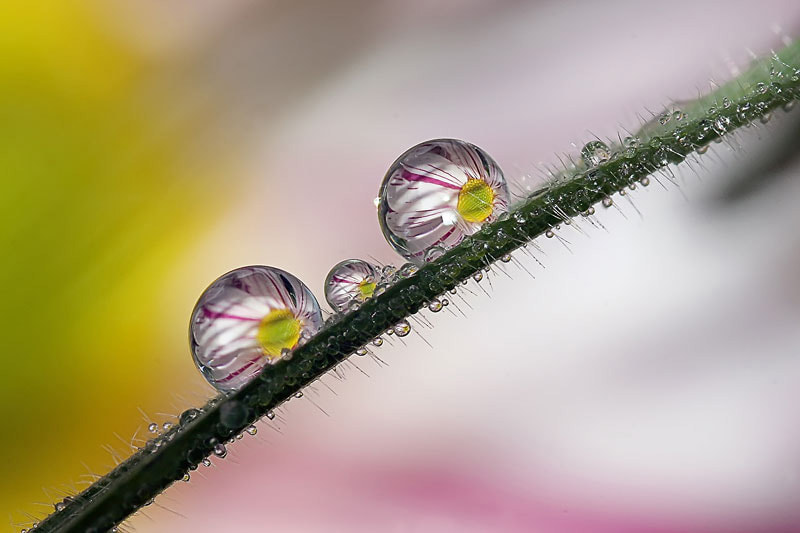 Photograph Dew by Nino Matasa on 500px