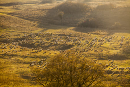 Flock of sheep by Janet Kwan on 500px