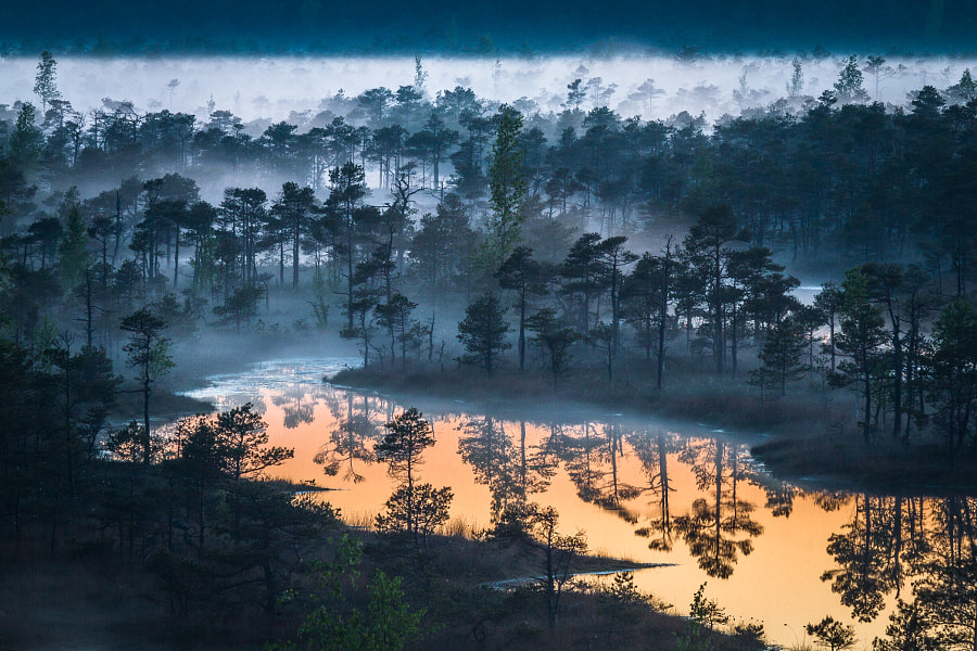 Swamp things by Eriks Zilbalodis on 500px.com