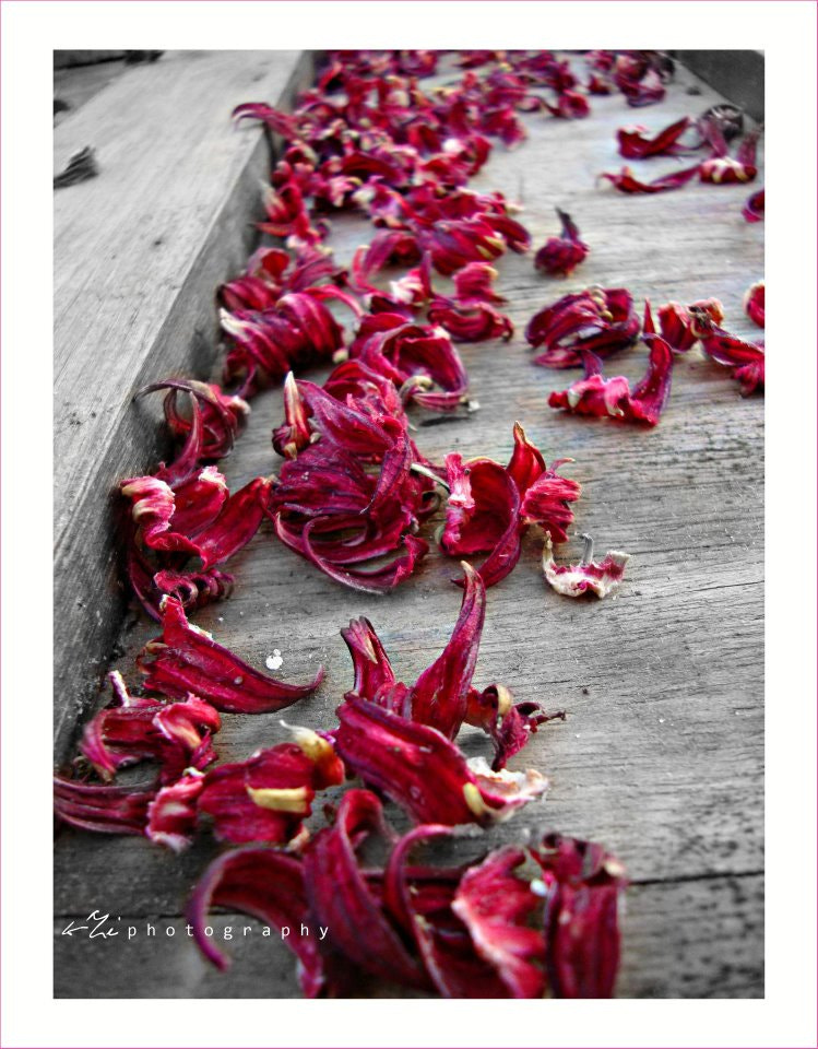 Photograph Life isn`t a path strewn with roses .. by Khalid Zidan on 500px