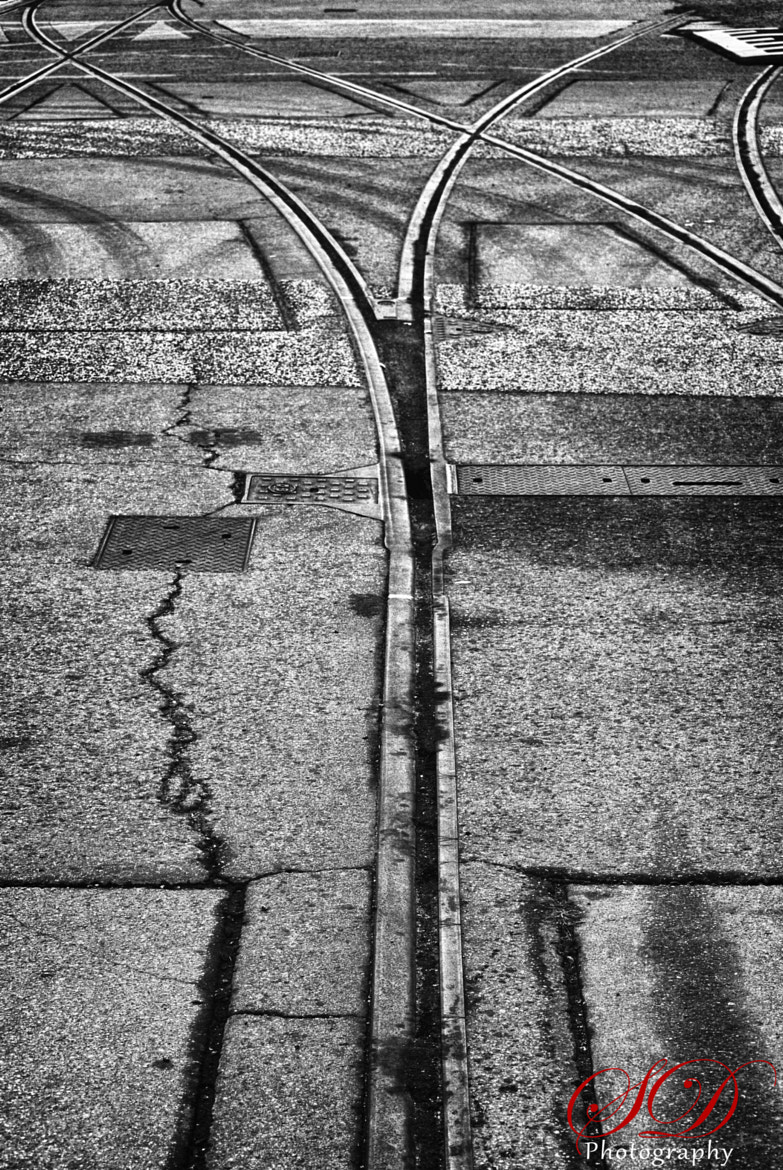 Photograph Split in Life's Path by Shayne Dcosta on 500px