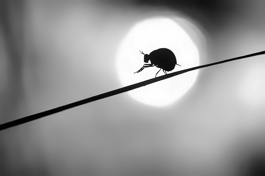Photograph Silhouette by Andan Saputra on 500px