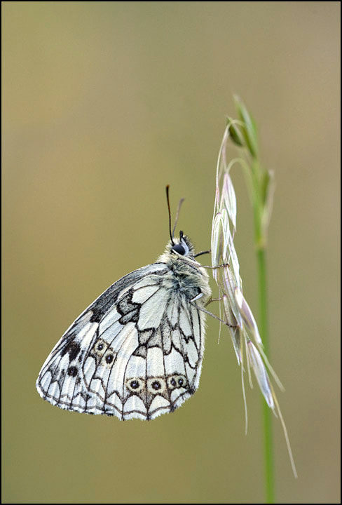 Photograph Delicate by Tony Flashman on 500px