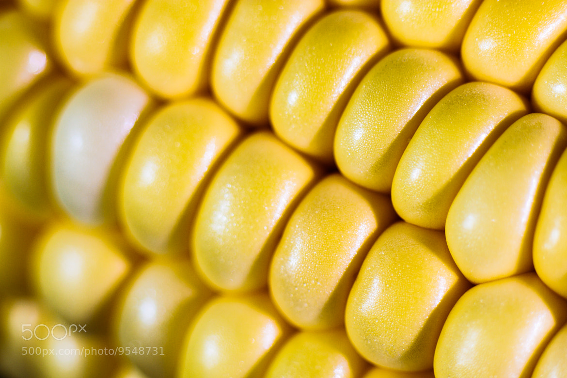Photograph Corn by Greg Booher on 500px