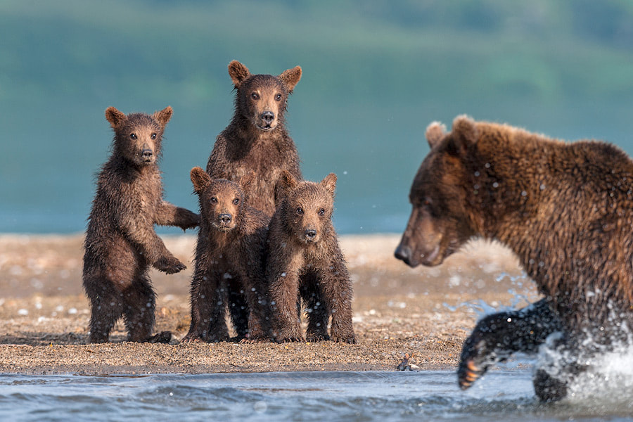 Photograph Wild horror by Sergey Ivanov on 500px