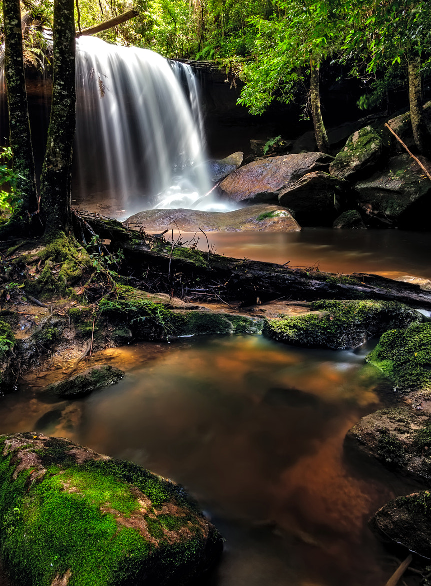 Photograph Untidy Forest by Mark Lucey on 500px