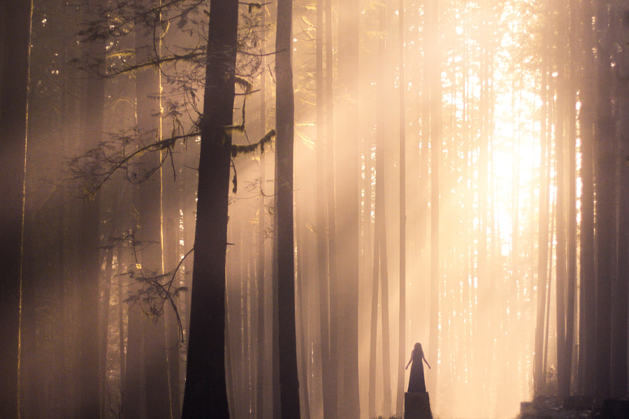 Photograph Spirit of the Forest by Lizzy Gadd on 500px