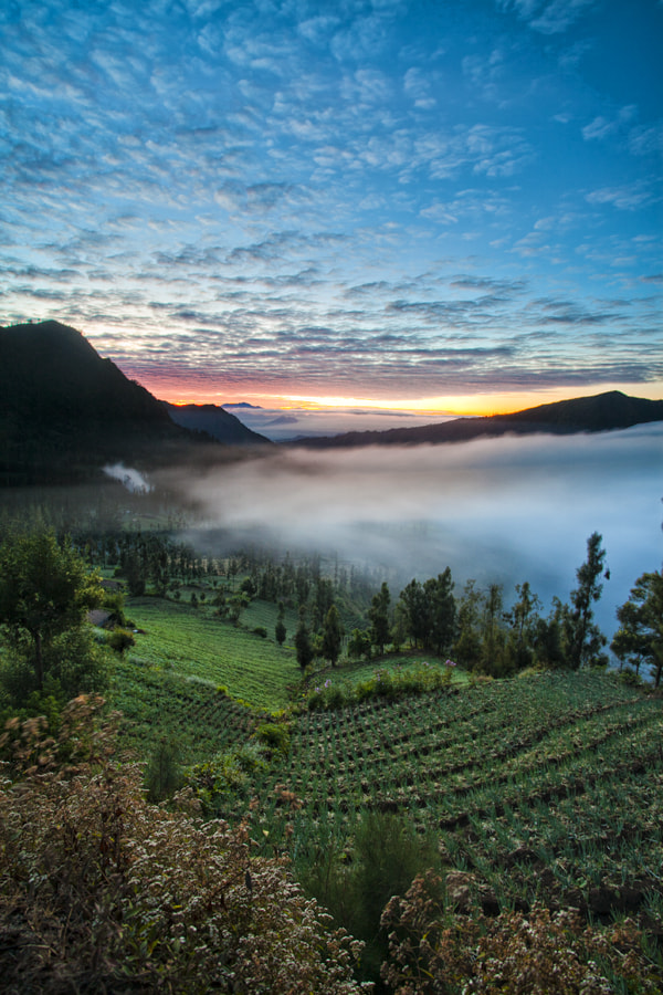Photograph coldly morning by Eko Sumartopo on 500px