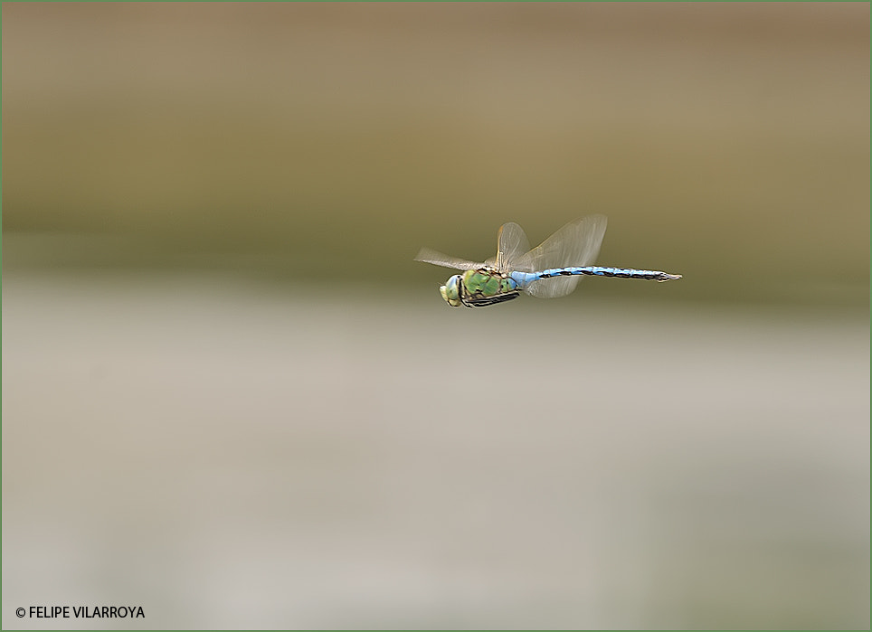 Photograph Turbo blue and green by Felipe  vilarroya on 500px