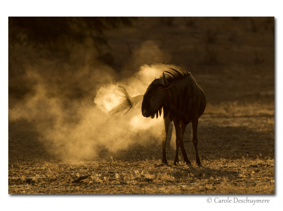 Photograph dust in the wind by Deschuymere Carole on 500px