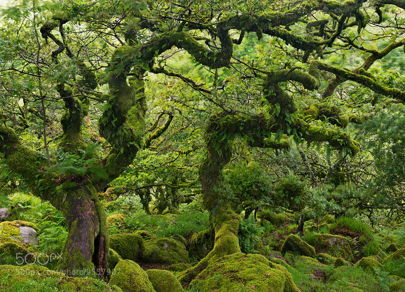 Photograph Deep in Fangorn by Adam Burton on 500px