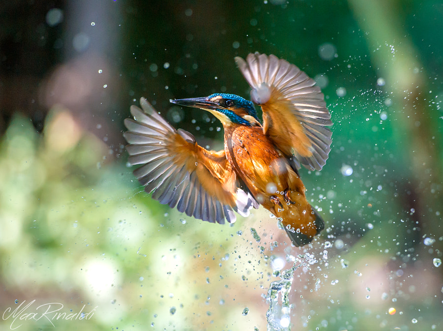 My Treasure by Max Rinaldi on 500px.com