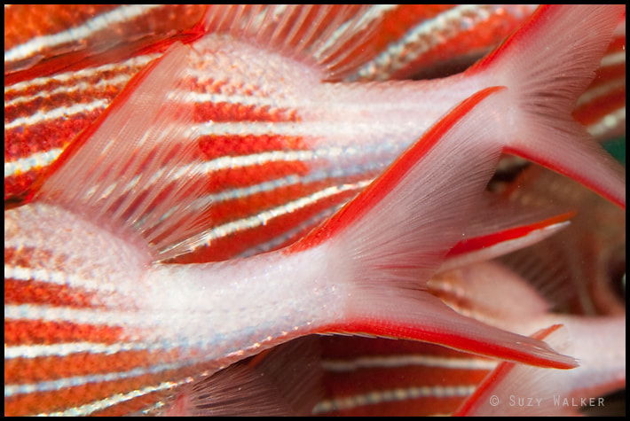 Photograph Fish Tails by Suzy Walker-Toye on 500px