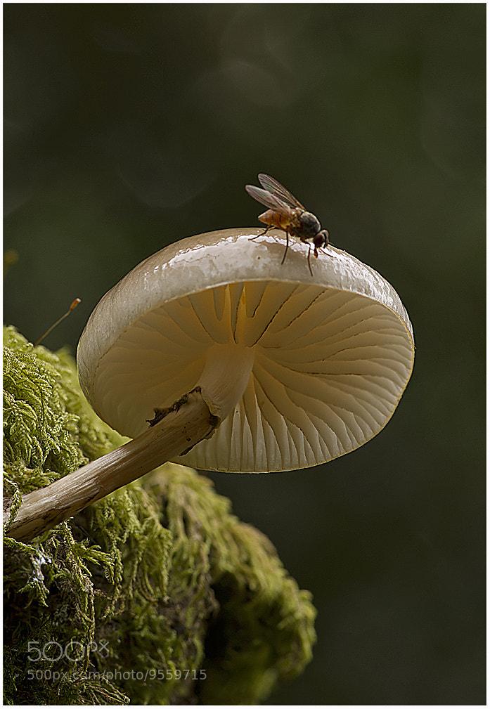 Photograph Porcellain Fungus by Richard Bond on 500px