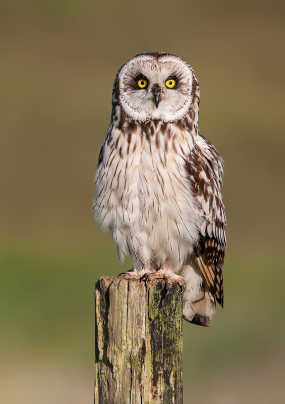 Photograph Poser by Lea Roberts on 500px