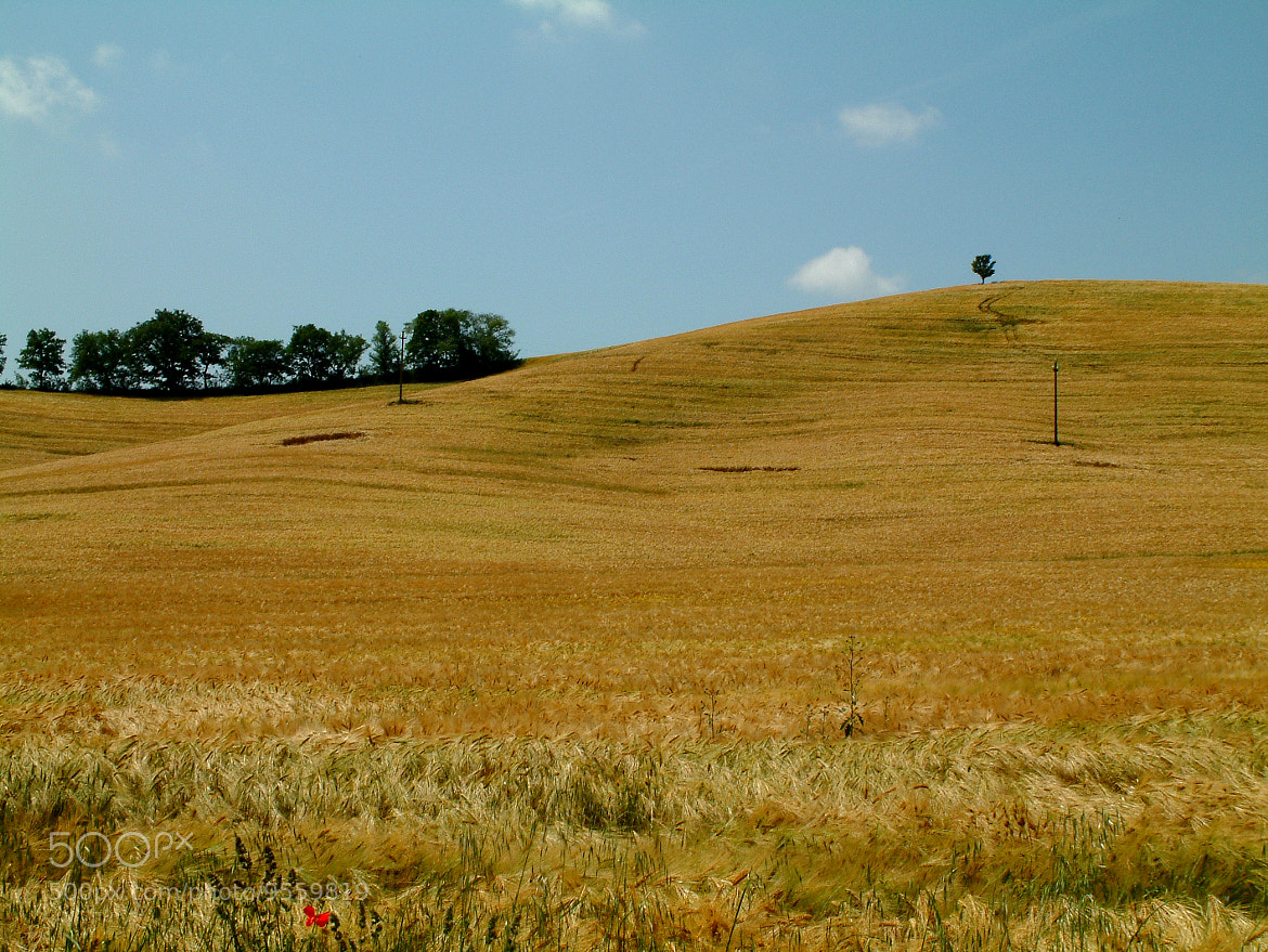 Photograph Golden hill by ilaria massarelli on 500px
