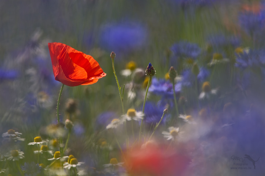 Photograph Colours of Summer by Marion Vollborn on 500px