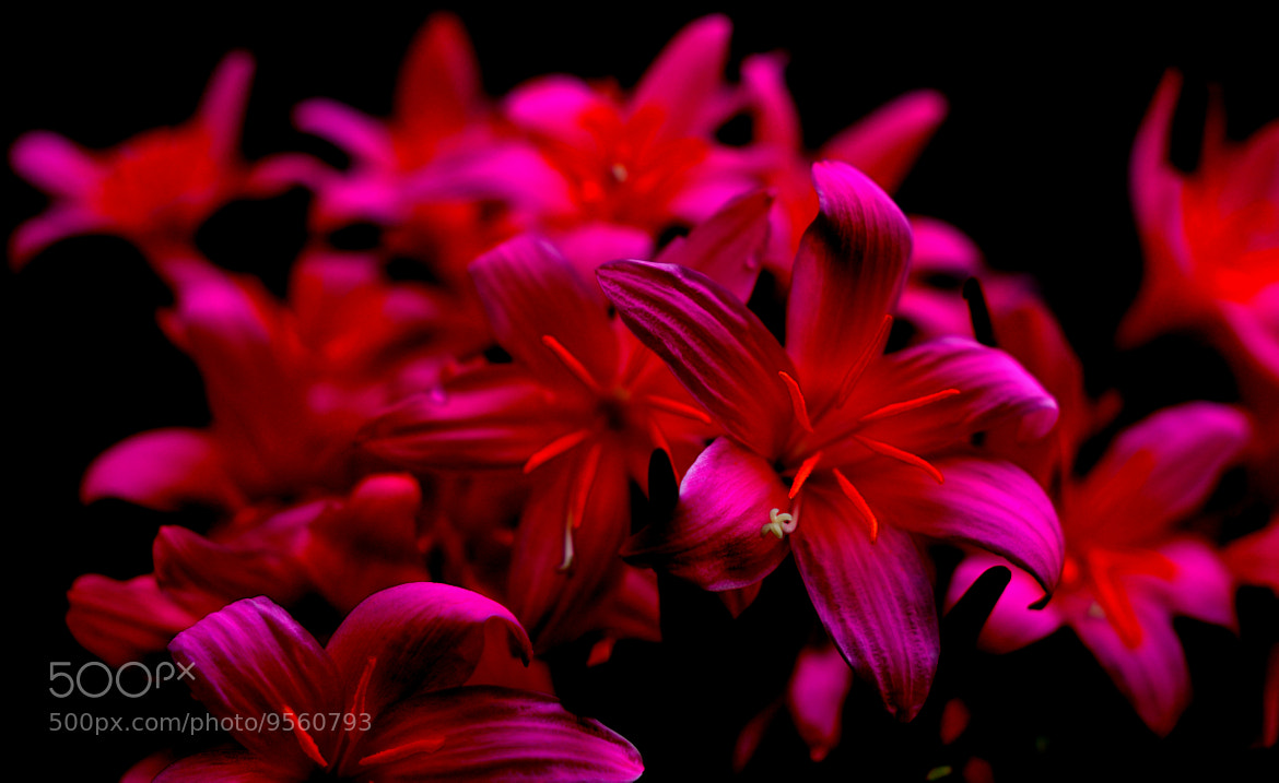 Photograph Flowers  by Prakhar  Krishan on 500px