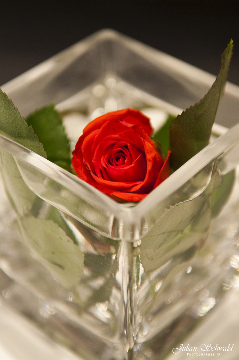 Photograph Rose in the Glass  by Julian Schwald on 500px