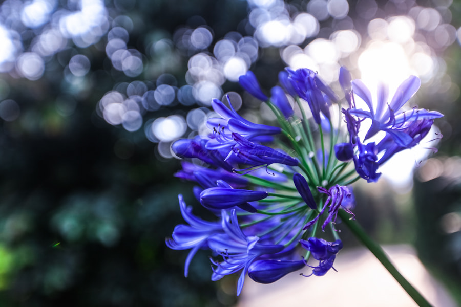 Photograph When I'm Feeling Blue by Rose Kampoong on 500px