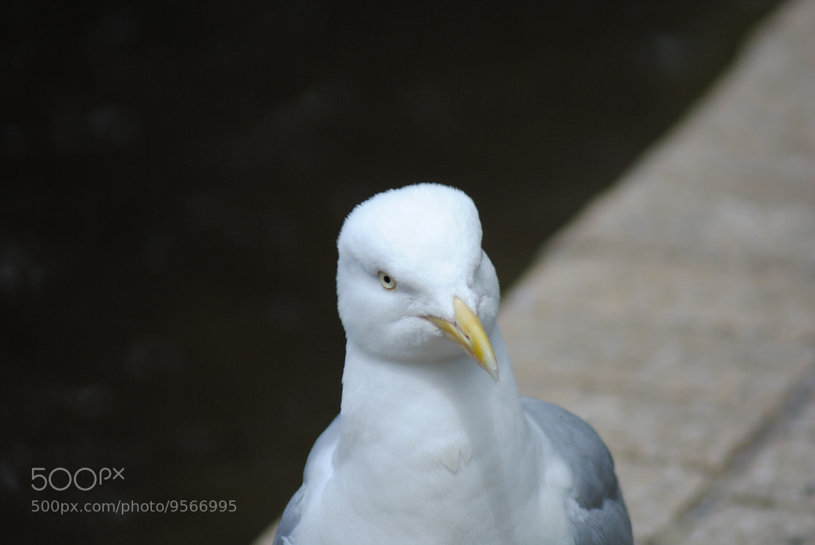 Photograph seagull by julian john on 500px