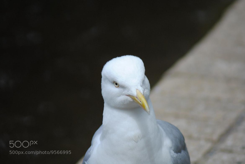 Photograph seagull by julian john on 500px