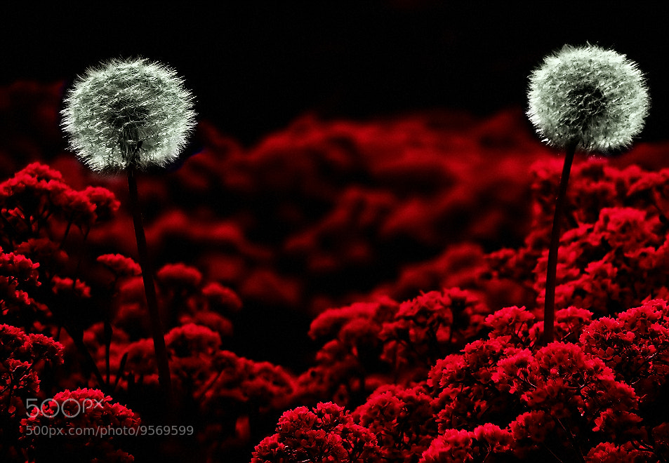 Photograph Two of that kind  by EMERALD WAKE © on 500px