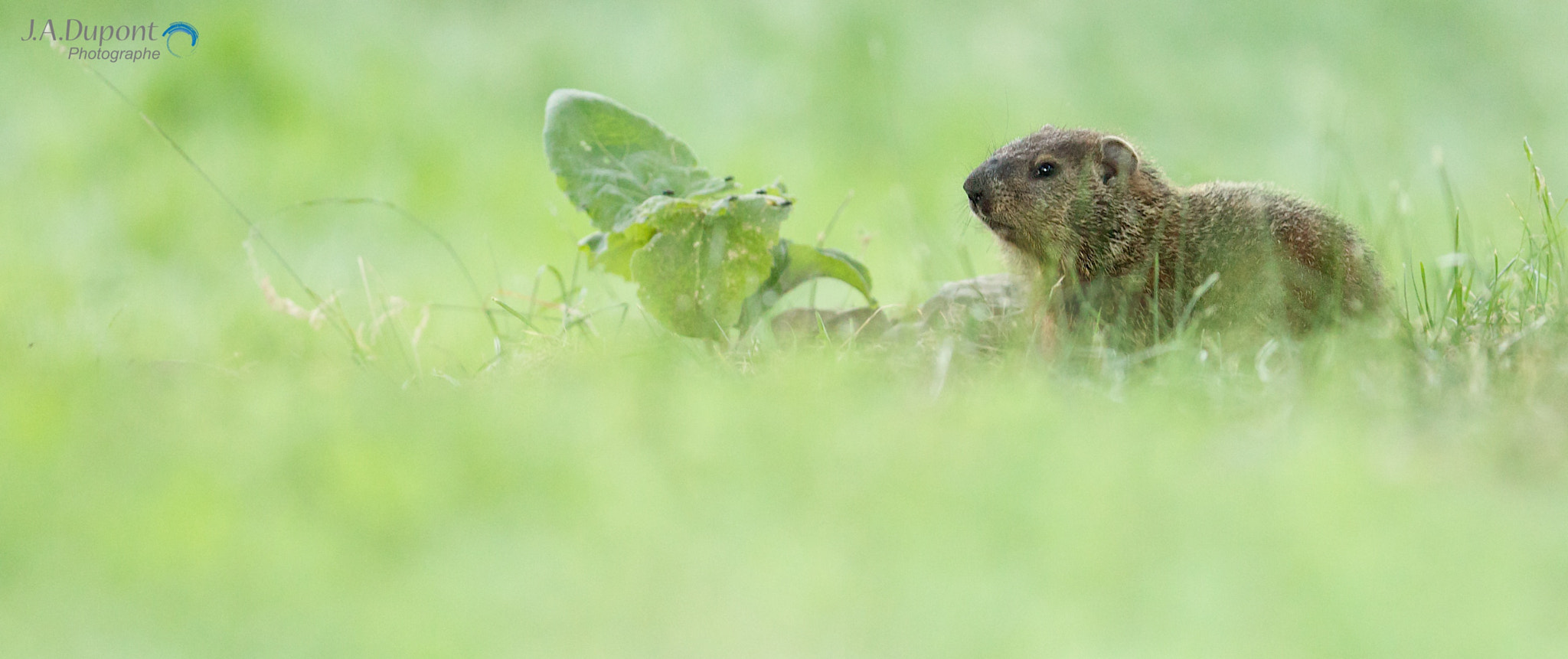 Photograph Groundhog summer day by Jacques-Andre Dupont on 500px