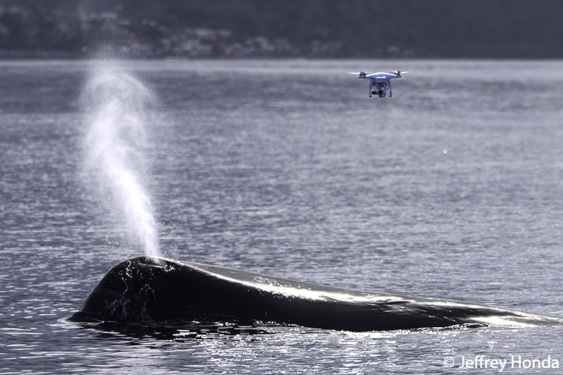 Photograph drone with sperm whale by Keri Wilk on 500px