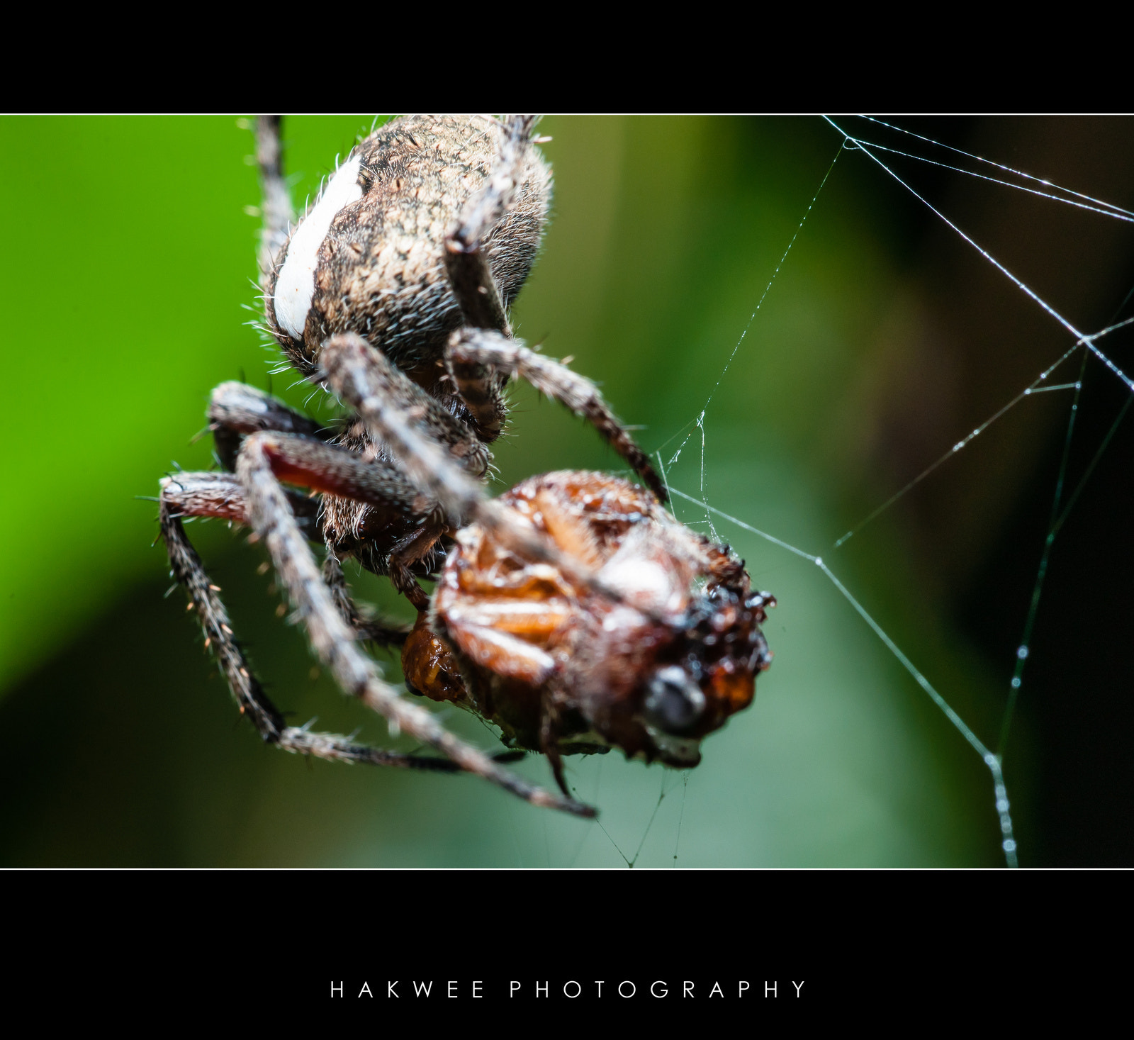 Photograph What's for dinner? by Hak Wee on 500px