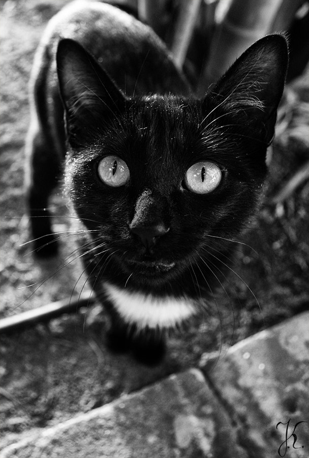 Photograph tiny panther vol.2 by Juliana Kinas on 500px