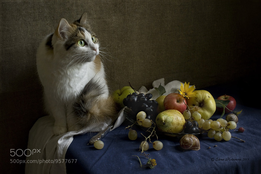 Photograph Cat, fruits and crow outside the window by Elena Kolesneva on 500px