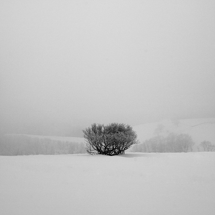 Photograph A Day in Snowy Lands #15 by Namdon Kim on 500px