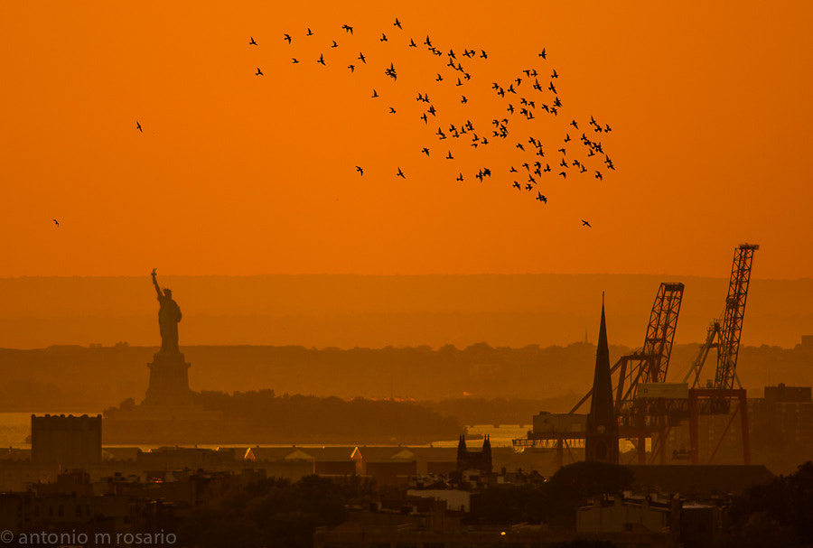 Photograph Afternoon Flight by Antonio M. Rosario on 500px