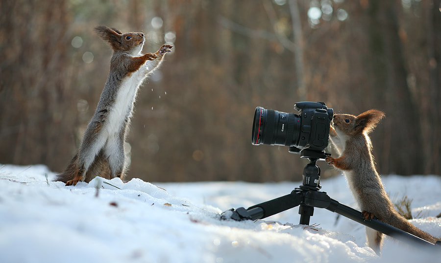 Take a photo me, photographer! by Vadim Trunov on 500px.com