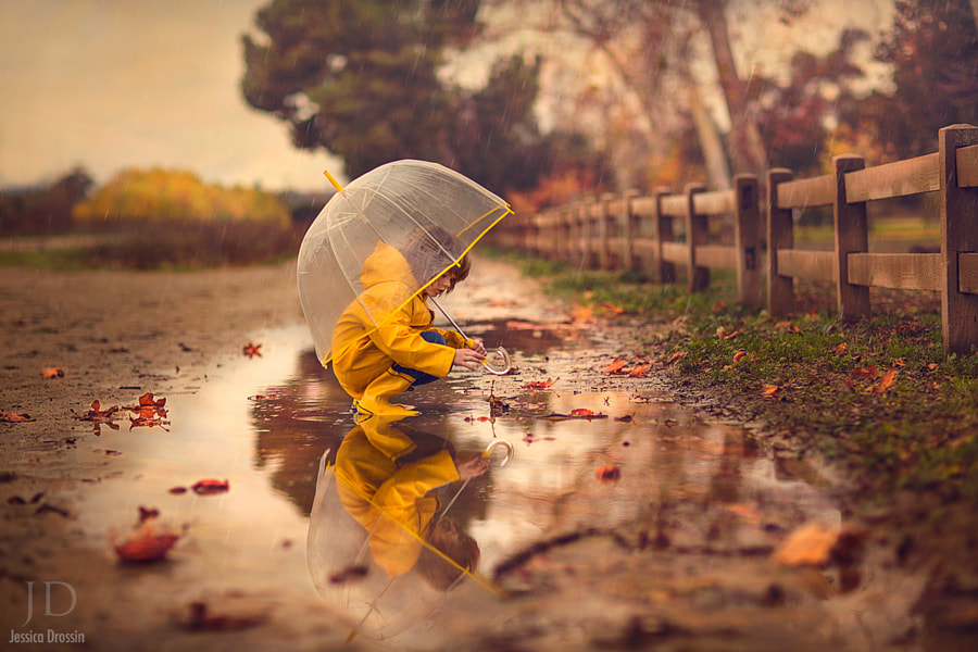 Photograph Wet Leaves by Jessica Drossin on 500px