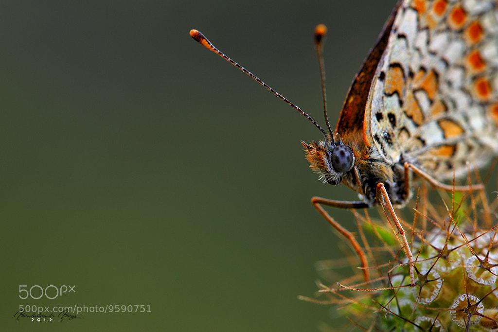 Photograph Butterfly Effect by Abdulkadir Abaz on 500px