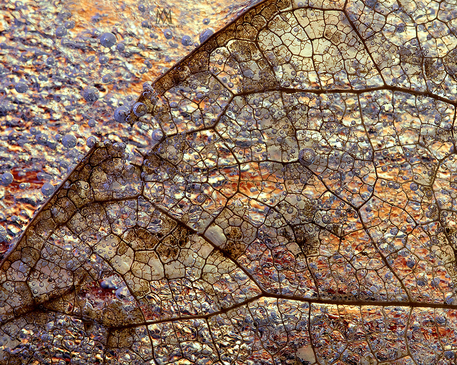 Abstract leaf details