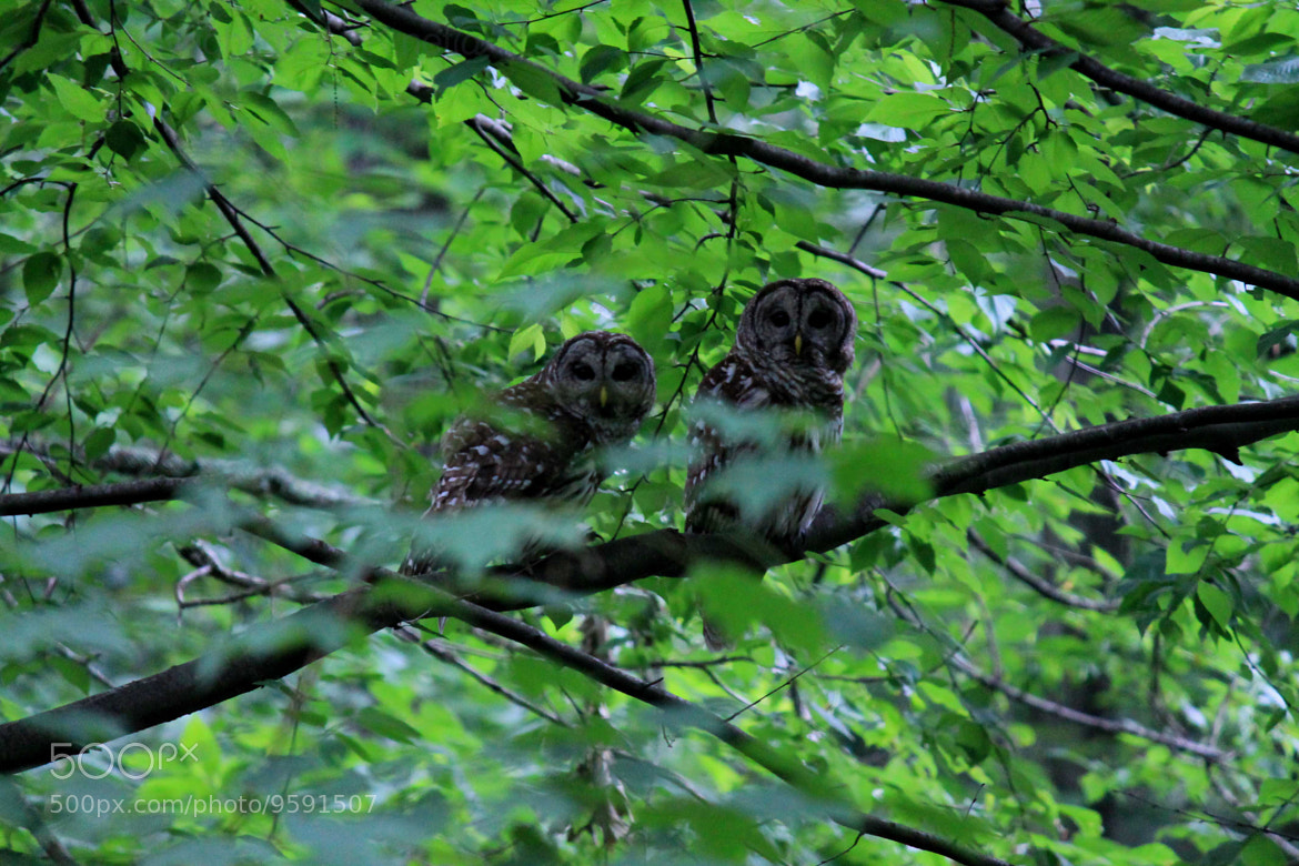 Photograph Mr and Mrs Owl. by Lily K on 500px