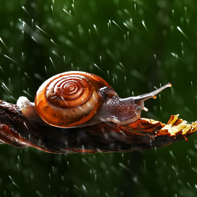 Snail by Panumas Pattanakajorn (panu)) on 500px.com
