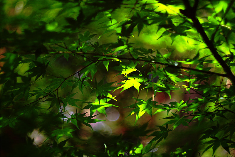 Photograph in the morning light by D W Kim on 500px