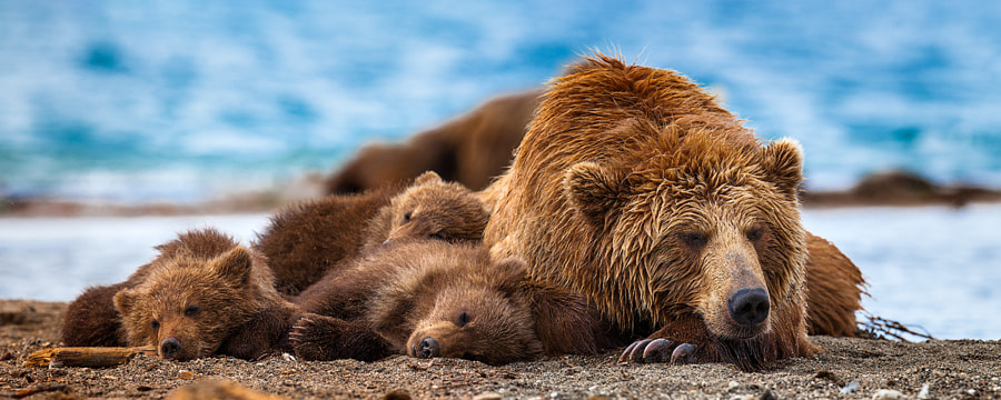 Photograph Siesta by Sergey Ivanov on 500px