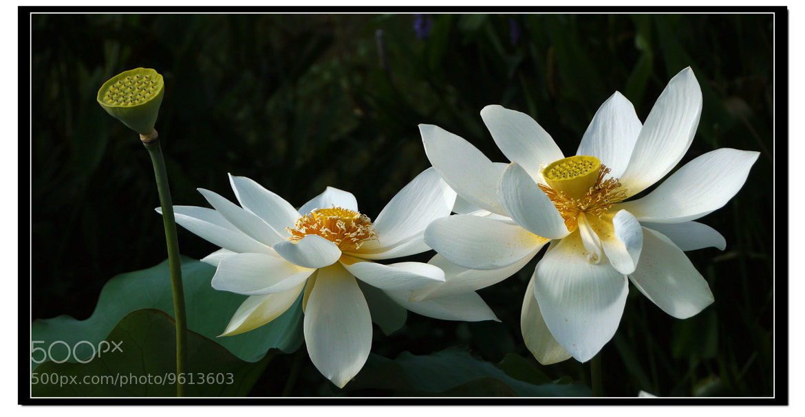 Photograph Twin Sisters by Sherman C. on 500px