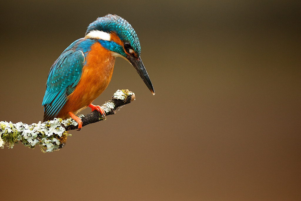 Photograph Mr K. Fisher by Mark Bridger on 500px