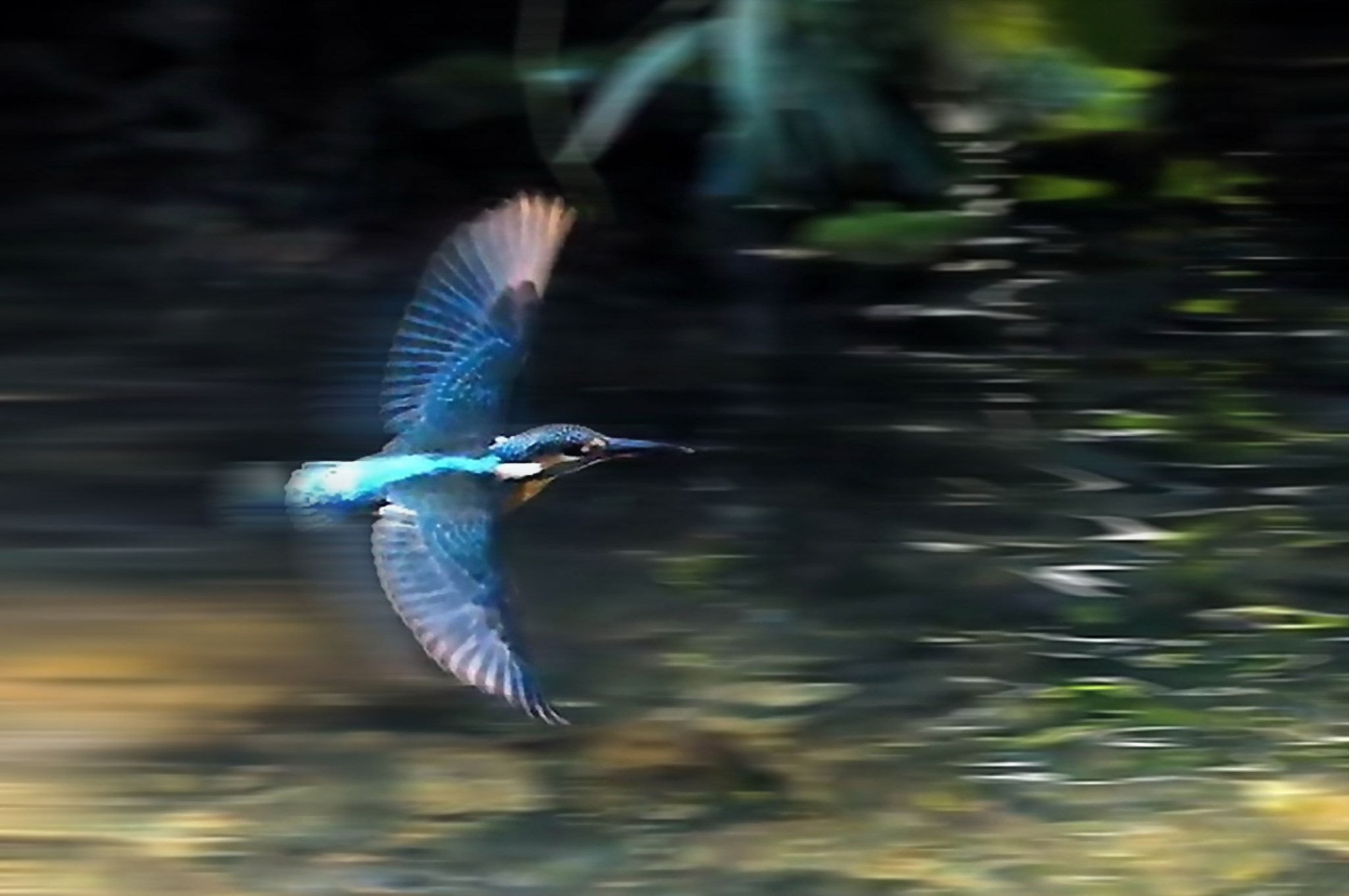 Photograph Kingfisher to fly fast by KEN OHSAWA on 500px