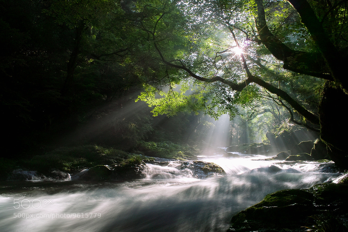 Photograph Morning Light by Junya Hasegawa on 500px