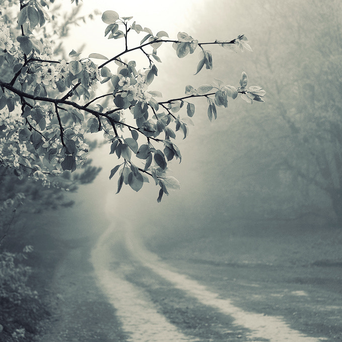Photograph foggy road by Nick Lisitsin on 500px