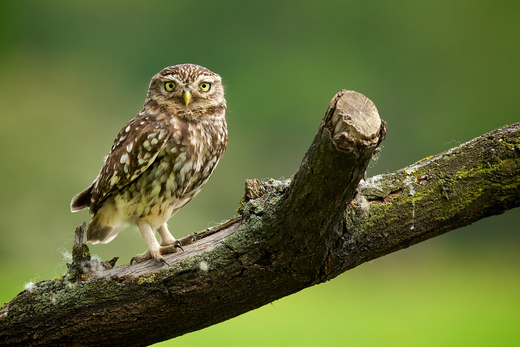Photograph hello! by Mark Bridger on 500px